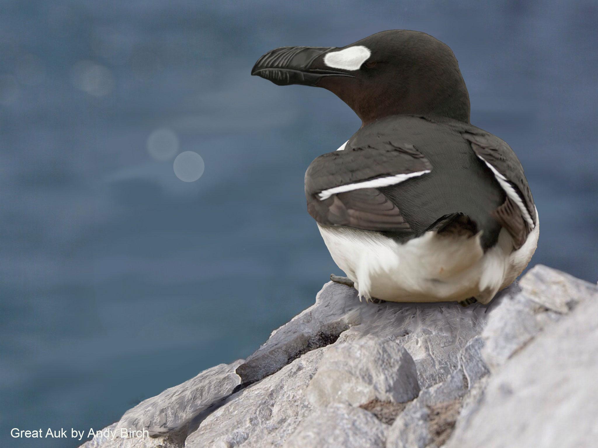 Surfbirds - Species Remembranc...