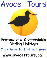 Avocet Tours - click here