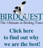 Birdquest