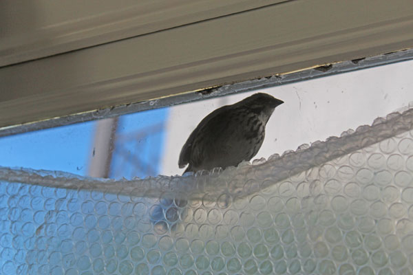Stickers To Prevent Birds Flying Into Windows Famous Bird - Window stickers to deter birds