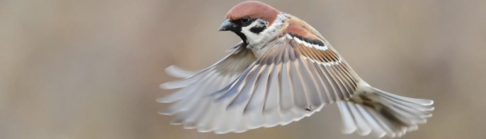 BELVIDE BIRDING