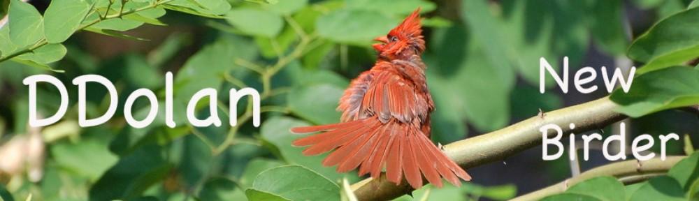 DDolan New Birder