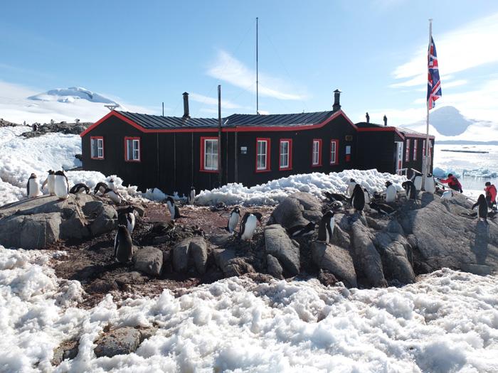 Gentoo Penguins At Port Lockroy Antarctica Three Amigos