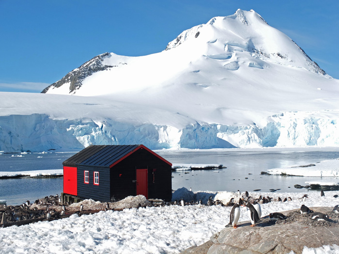 Gentoo penguins at port lockroy antarctica three amigos for Port lockroy