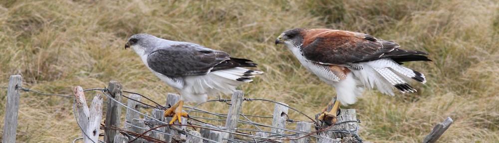 Three Amigo's Birding