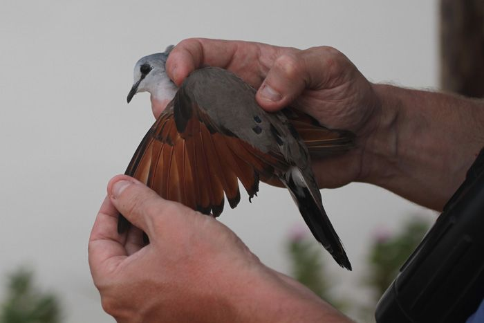 Gambia Birding and ringing