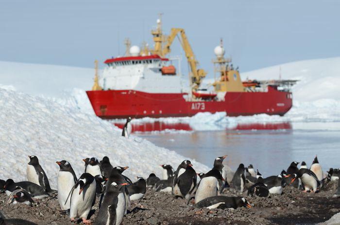 Gentoo penguin colony at port lockroy antarctica plus for Port lockroy