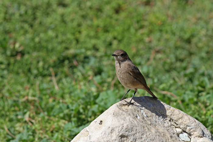 Familiar Chat 1, Betty's Bay, 12 Sep 2014