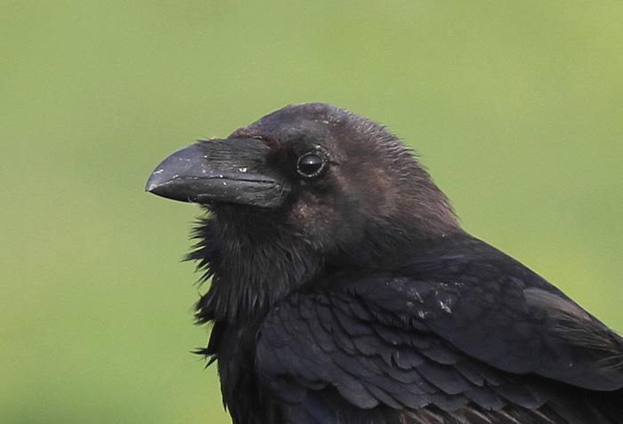 Raven 4, Portland, 20 May 2016