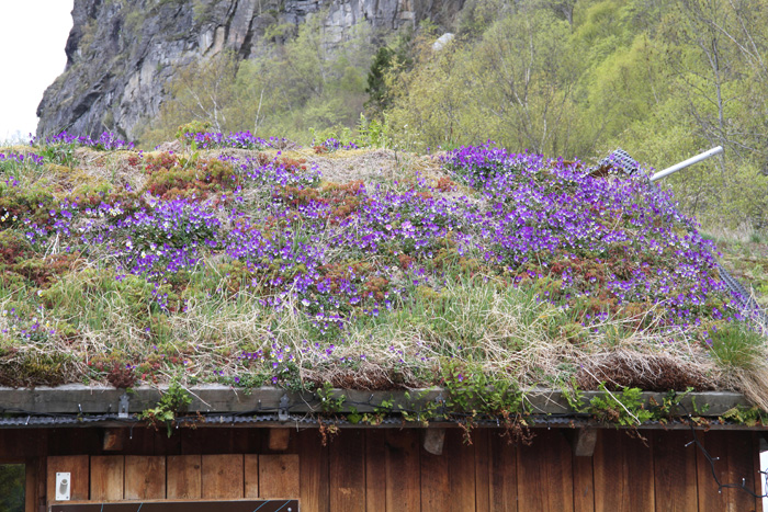Colourful Roof, Geiranger