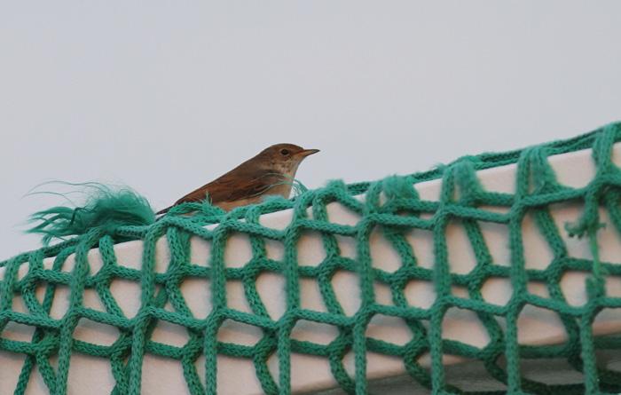 Nightingale 1, Adriatic Sea, 12 Sep 2016
