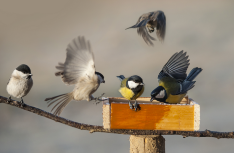 La anatomía de las aves – Aves en Español