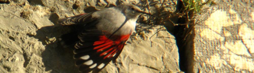 Birding in Switzerland