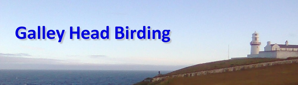 Galley Head Birding