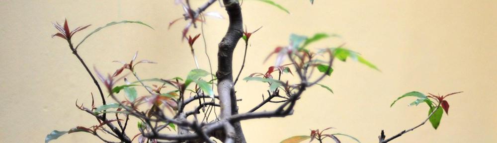 The Birdman of Alcossebre (Spain)