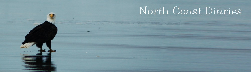 North Coast Diaries