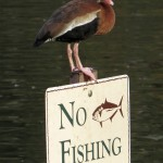 no_fishing