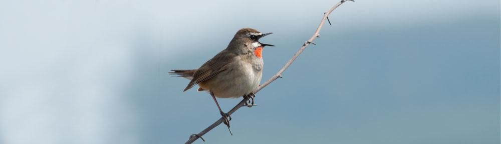 Oshima Birding