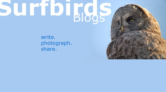 Surfbirds Blogs