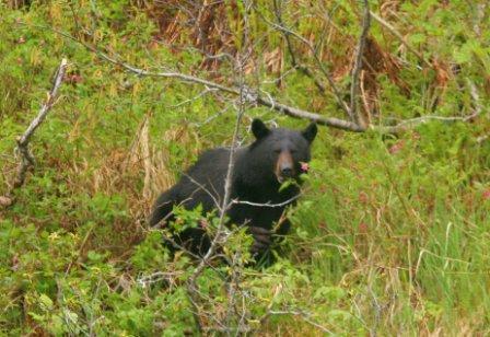 Black bear diner coupons sacramento