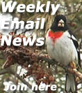 Weekly Email News