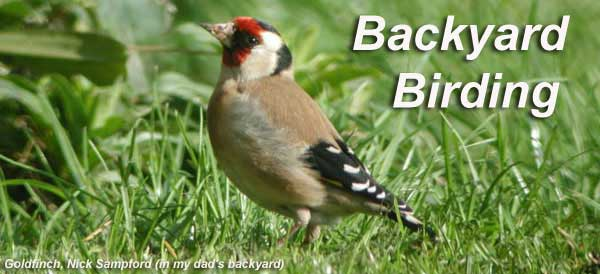 Charmant Bird Photo   Goldfinch, Copyright Nick Sampford