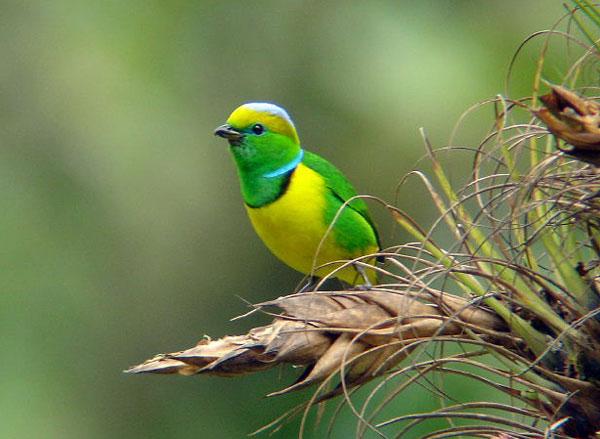Rancho Naturalista, Costa Rica