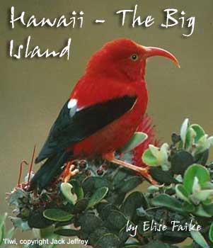 bird picture I'iwi