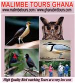 Malimbe Tours