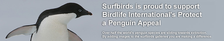 Every image loaded to this galleries raises money for  Birdlife International