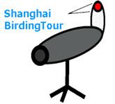Shanghai Birding