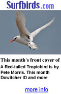 Visit Surfbirds for all the latest World Birding News