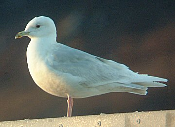 Birds Alphabet 20040311125801