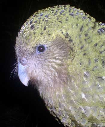 Birds Alphabet 20040504025857