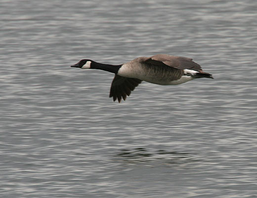 Canada Goose down sale discounts - Canadian Tar Sands Company Found Guilty | surfbirds