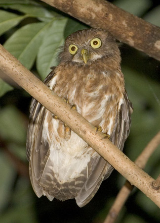 Conservationists recognised in splitting of Philippine ...