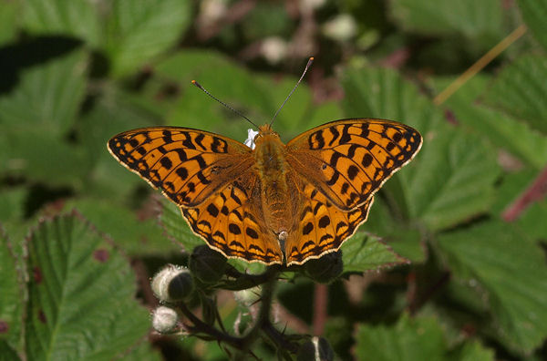 Orange and brown butterfly the hippest - Brown butterfly meaning money ...