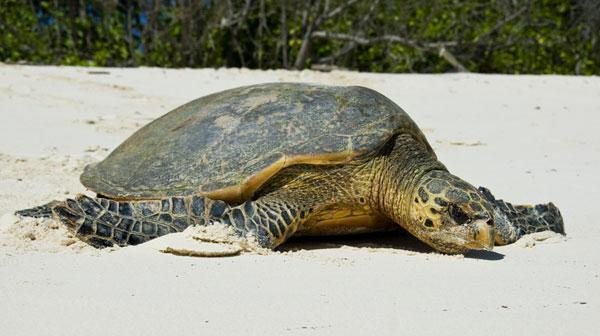 Turtle On Land : Sea Turtles On Land turtles in trouble: 11 most threatened sea turtle ...