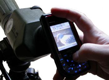 Surfbirds com - Nokia 7610 Camera Phone Review